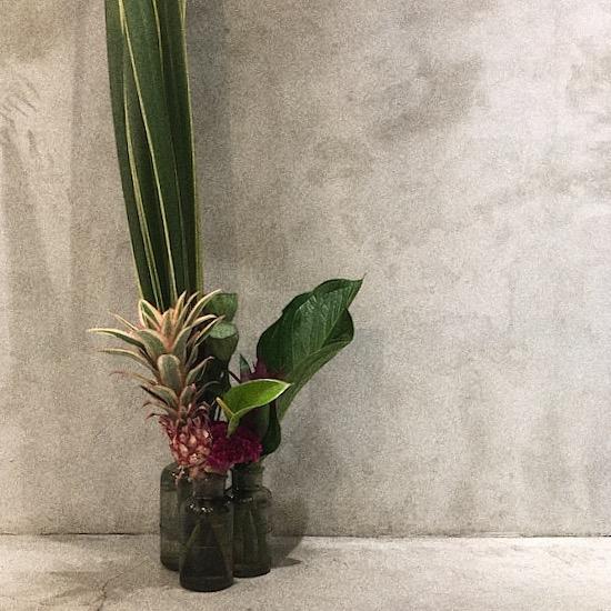 今週のお花たち